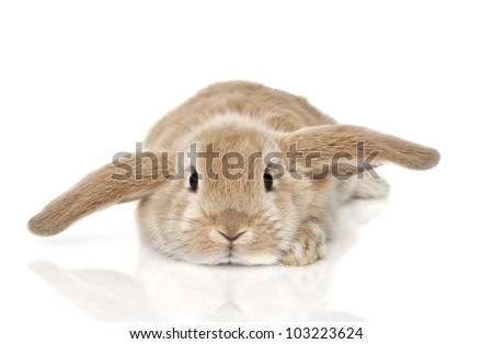 Cute bunny isolated on background - stock photo