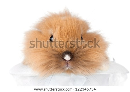 cute bunny pet close up