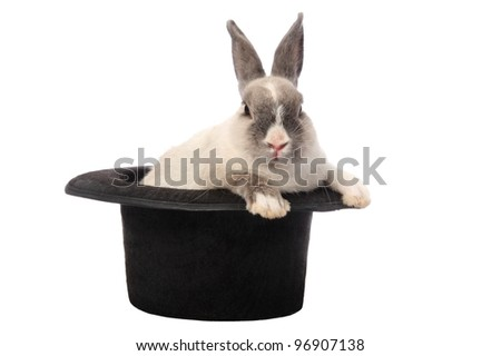 Cute bunny rabbit climbing out of a black hat - stock photo