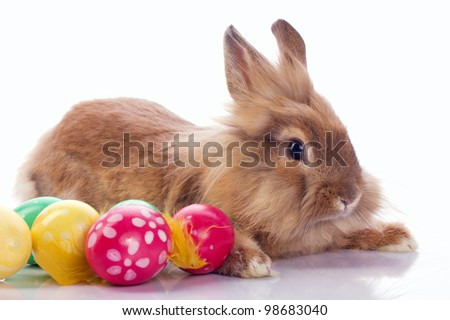 Cute bunny with easter eggs isolated on white