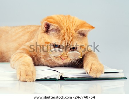 Cute business cat wearing glasses reading notebook (book) - stock photo