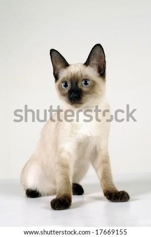 Cute Cat - stock photo