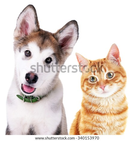 Cute cat and dog isolated on white - stock photo