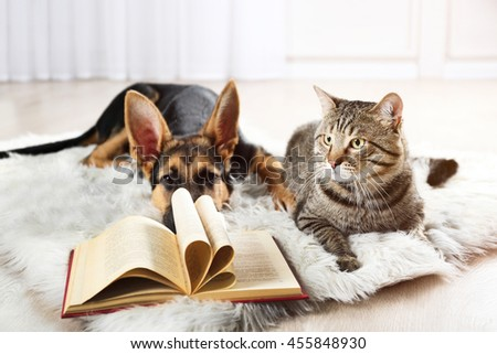 Cute cat and funny dog with book on carpet - stock photo
