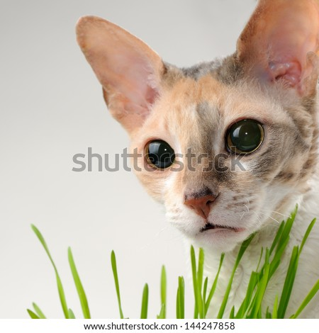 Cute Cat and Green Grass - stock photo