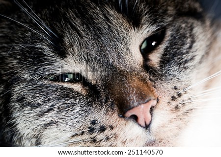 Cute cat close-up portrait. Sleepy, happy time. Adorable kitten series. - stock photo