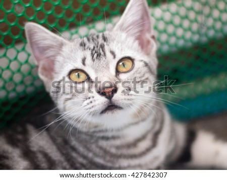 cute cat, cute funny cat close up, young playful cat, cat with blurred background.