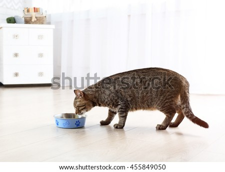 Cute cat eating at home - stock photo