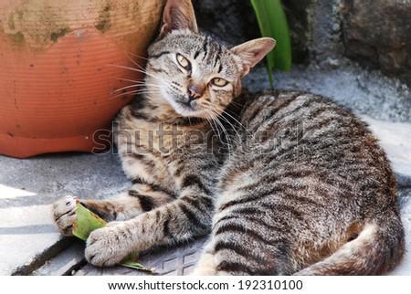Cute cat enjoying his life outdoors. - stock photo