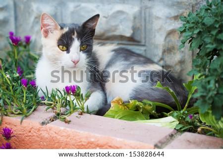 Cute cat enjoying life. - stock photo