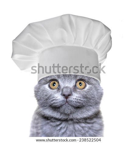 cute cat in a chef's hat  isolated on a white background - stock photo