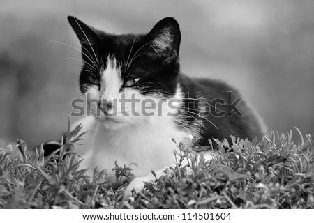 Cute cat in a clump - stock photo