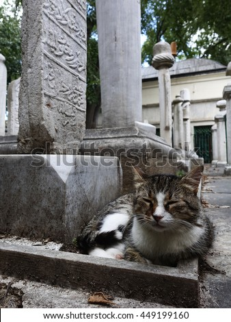 Cute Cat in the ottoman cementry