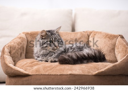 Cute cat is lying in his cat bed. - stock photo