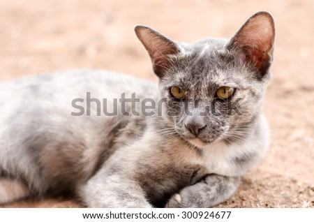 Cute cat is relaxing on the ground