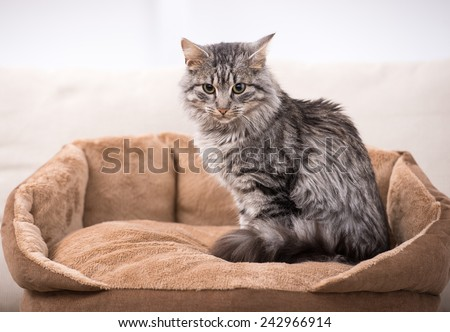 Cute cat is sitting in his cat bed. - stock photo