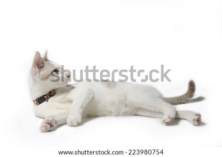 Cute cat isolated