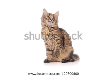 cute cat isolated on white