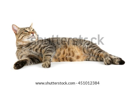 Cute cat, isolated on white - stock photo