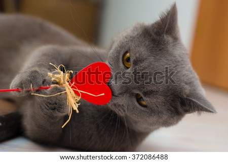 Cute cat keeps paws red heart - stock photo