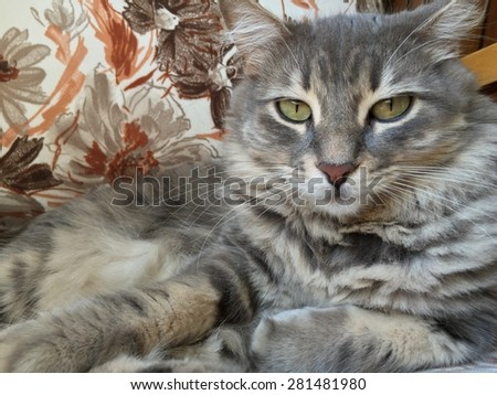 cute cat laying on sofa