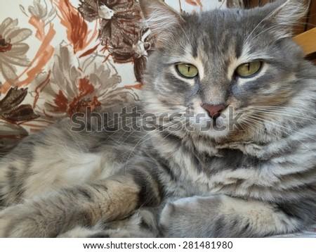 cute cat laying on sofa - stock photo