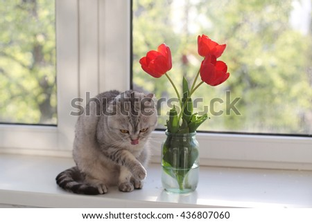 Cute cat licking his paw near the tulips