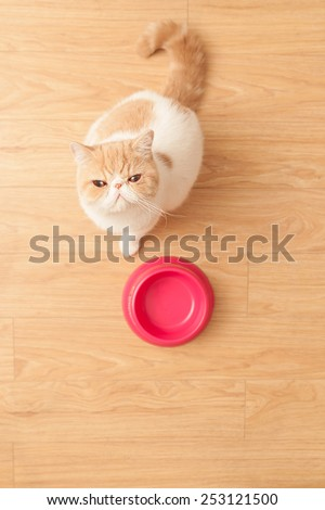 Cute cat looking at camera with his plate on the wooden floor  - stock photo