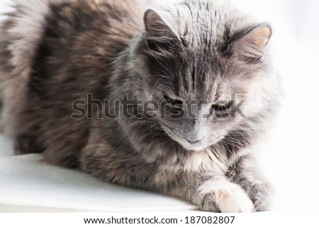 Cute cat looking down on white background