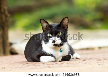Cute cat looking for something.