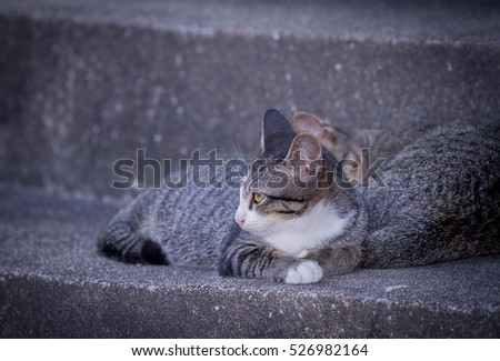 cute cat looking for something