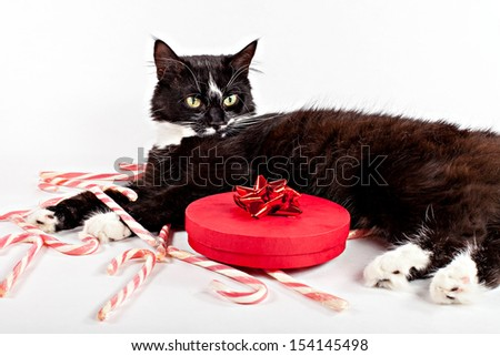 Cute cat lying near decorative gift with sugar candy, studio portrait isolated on white - stock photo