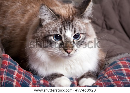 cute cat lying on a blanket.toned
