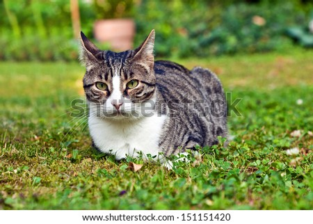 cute cat lying on grass in the garden