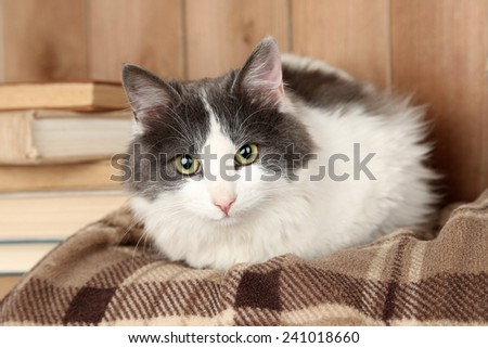 Cute cat lying on plaid with books