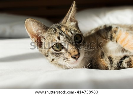 Cute cat lying on the bed - stock photo