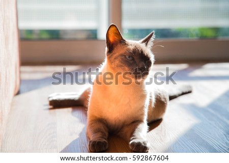 cute cat lying on the floor