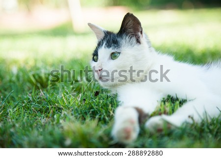 Cute cat lying on the green grass - stock photo