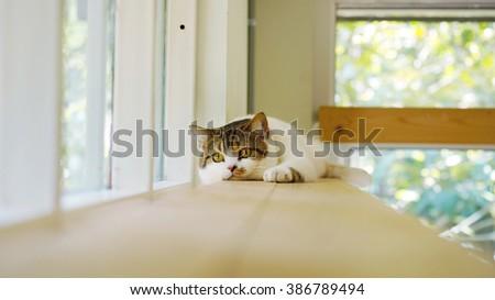 Cute cat lying on wooden shelf          - stock photo