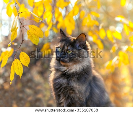 Cute cat near tree in autumn - stock photo