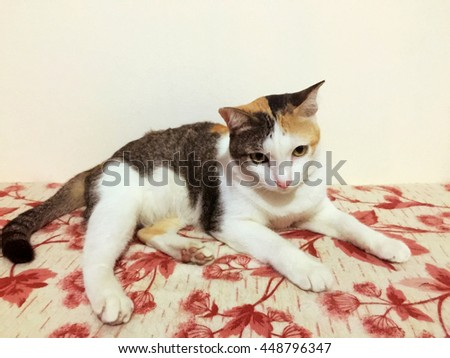 Cute cat on sofa oily paint