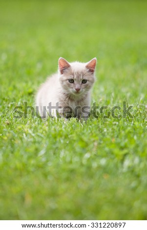 Cute cat on the green grass