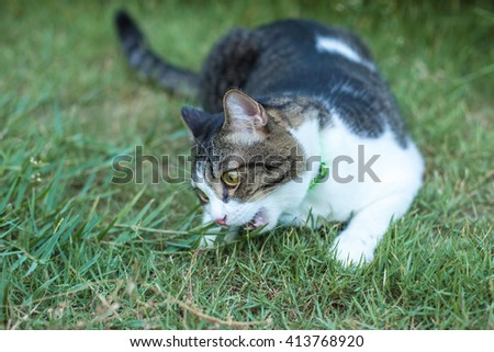 Cute cat on the plant relax outdoor