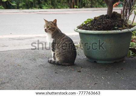 Cute cat on the street