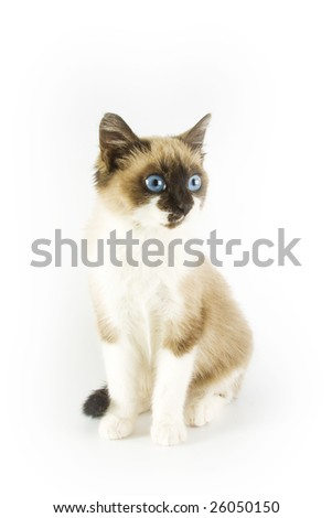 Cute cat on white background