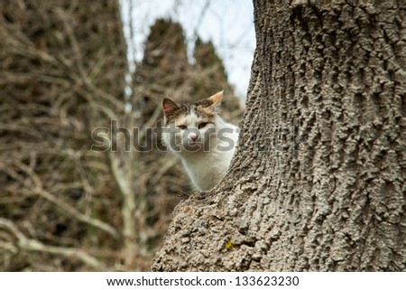 Cute cat outdoor sitting on a tree