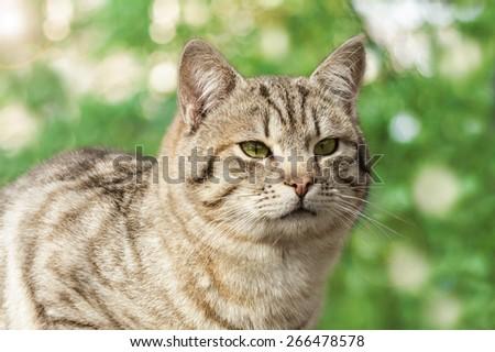 Cute cat outdoors - stock photo
