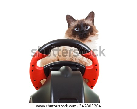 Cute Cat playing a video game console steering wheel with deadpan expression on his face fluffy, isolated on white - stock photo