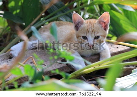 Cute cat playing in garden.