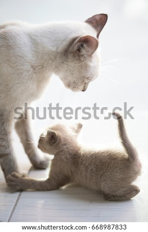 Cute cat playing with mom